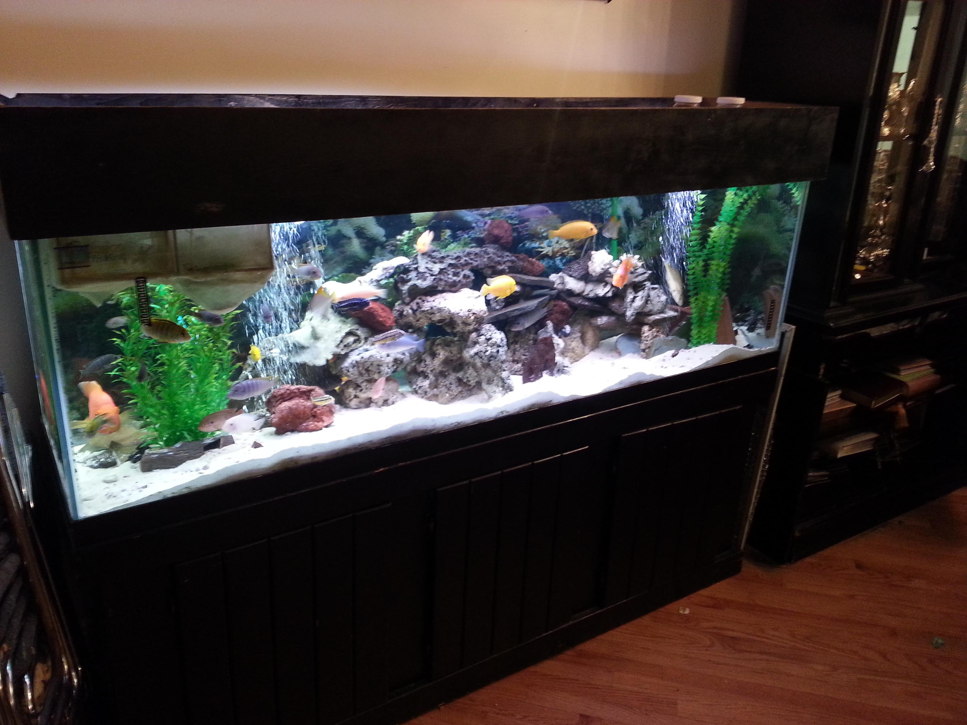 Portfolio kings fish tank for 125 gallon fish tank