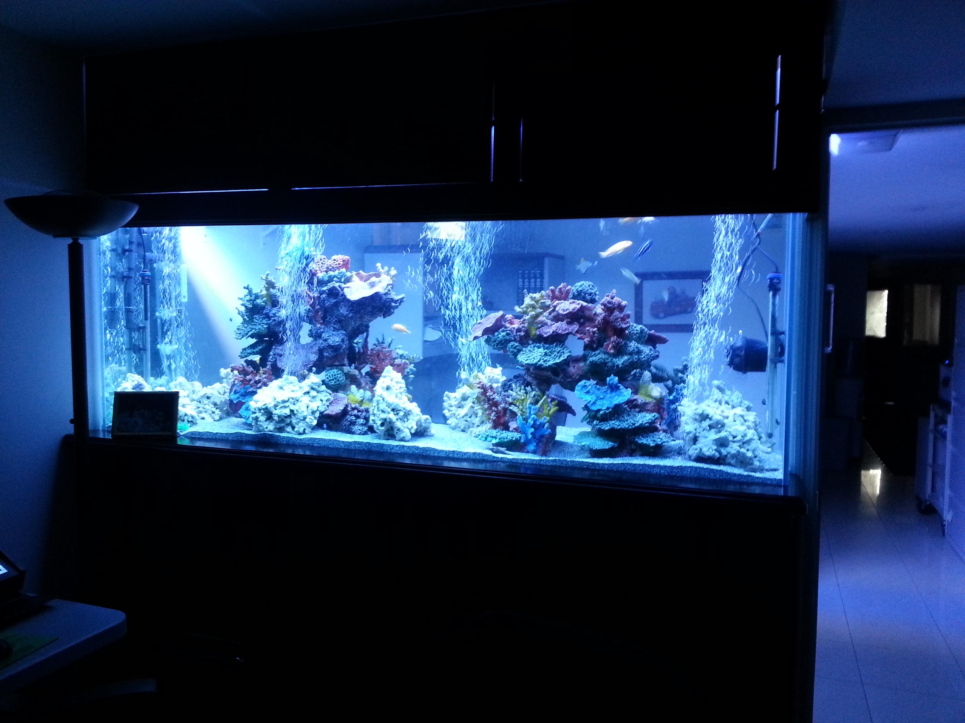 Portfolio kings fish tank for Glass fish tank