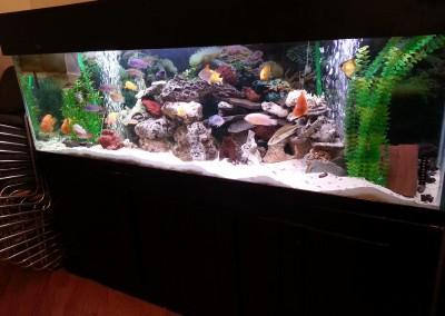 Aquarium with rocks