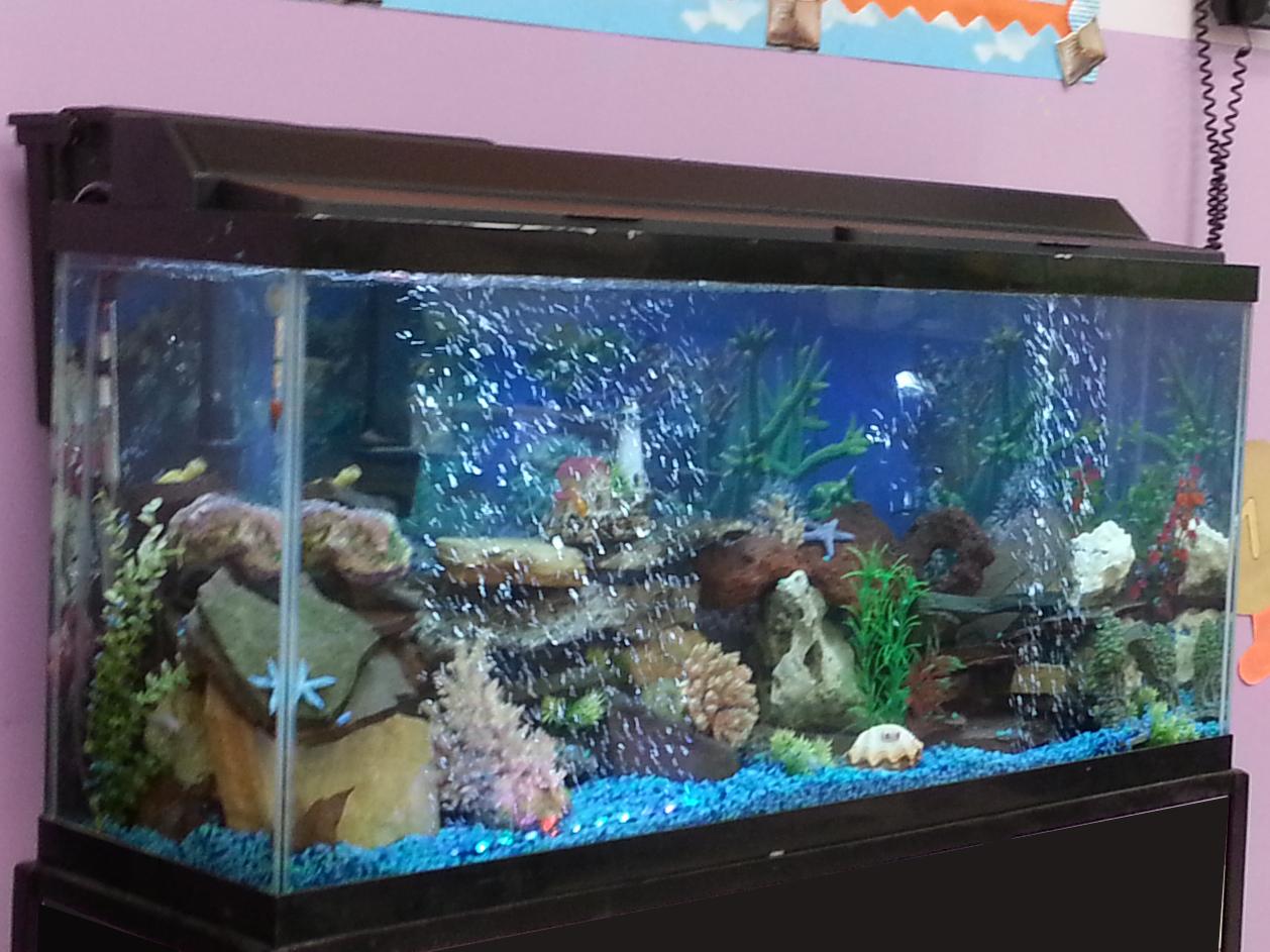 Find Aquarium 28 Images Home Accessories Cool Fish