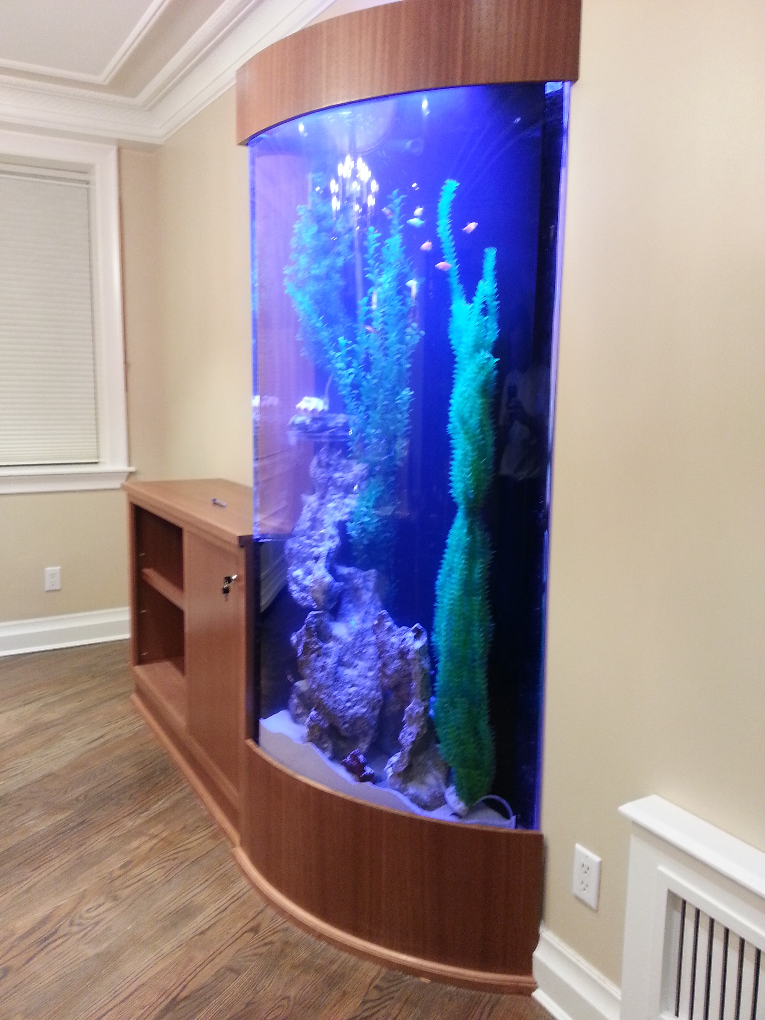 Fish tank vs aquarium -  Round Fish Tanks Aquariums All About Aquarium Design Acrylic Aquarium All About Aquarium Gl Vs