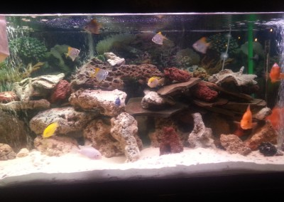 Fishtank with rocks