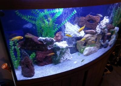Freshwater aquarium(3)