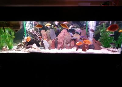 Glass fish tank aquarium