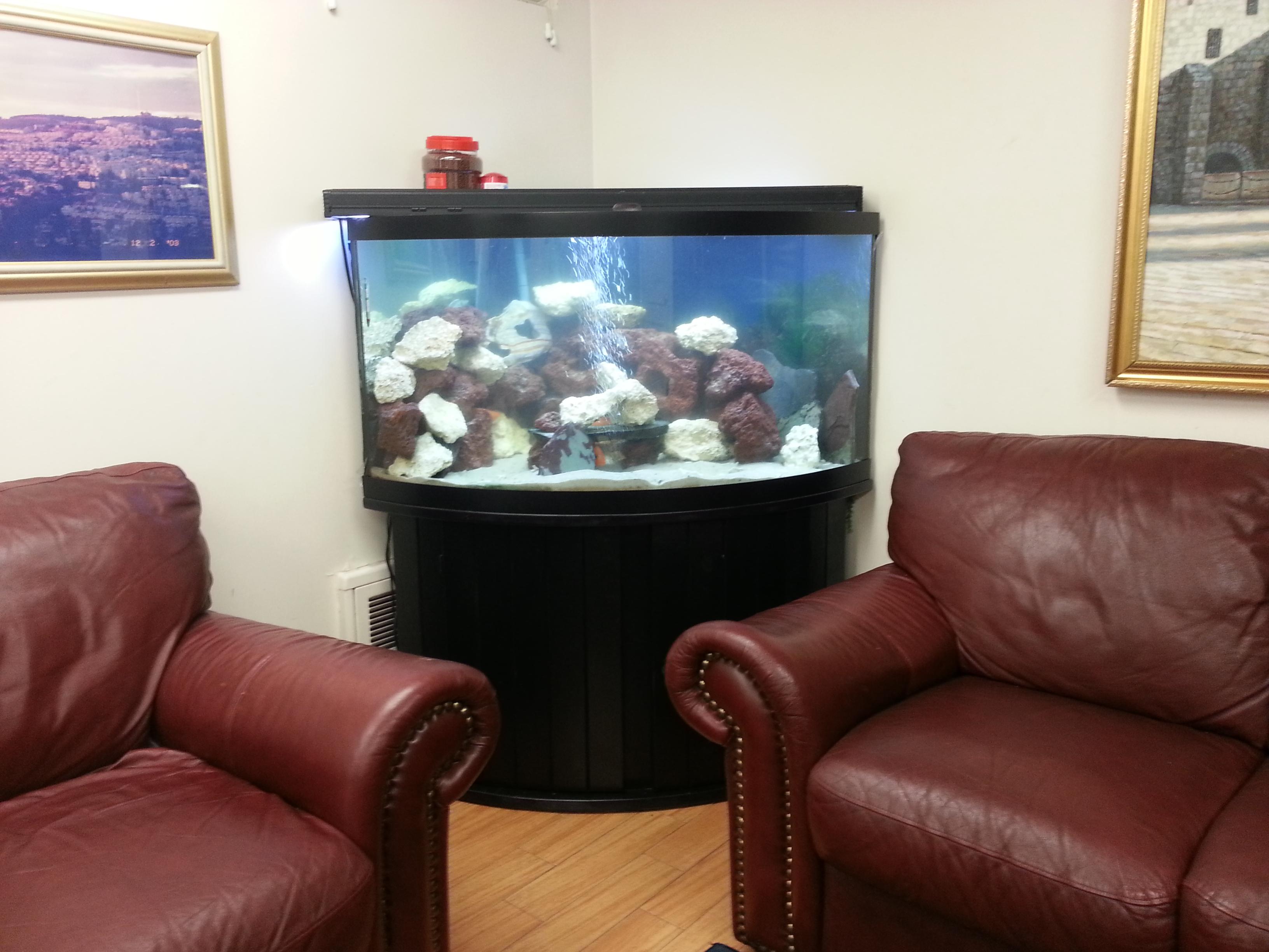 Portfolio Kings Fish Tank