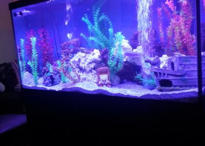 Living room fishtank(2)