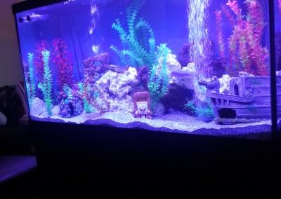 Living room fishtank(2)