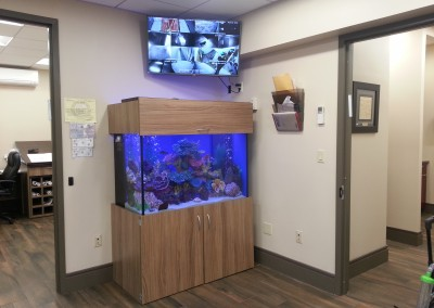 Office fish tank aquarium