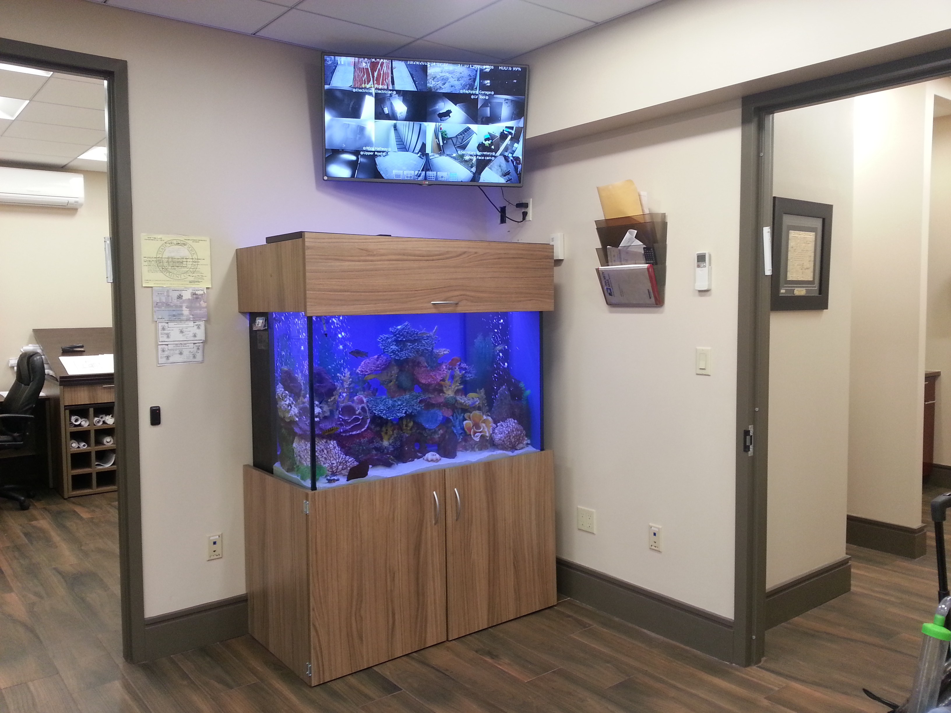 Portfolio Kings Fish Tank