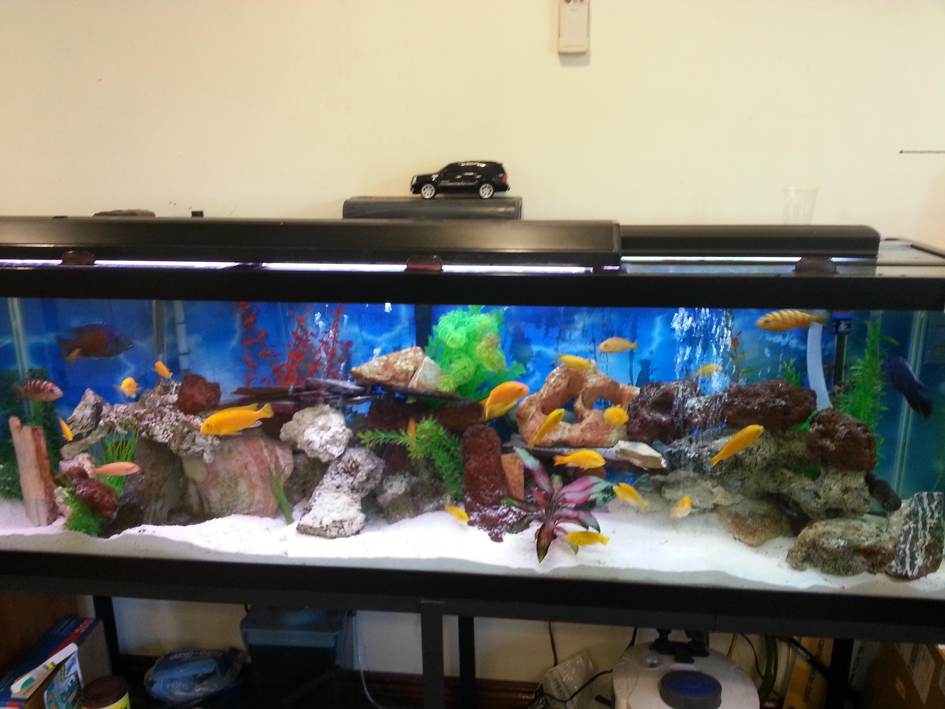 Portfolio kings fish tank for Office fish tank
